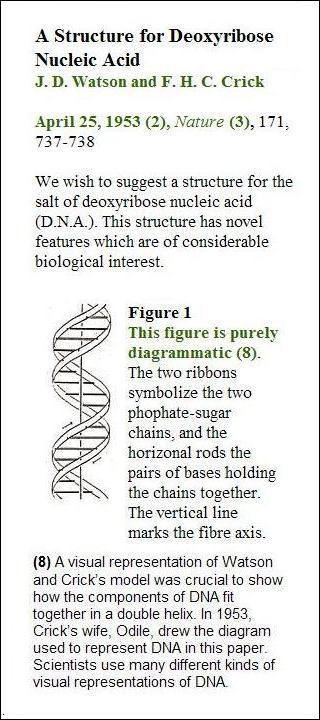 Odile Crick, illustration of DNA structure, 1953