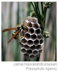 NY Times, Aug. 11, 2009-- Wasps' nest illustrating humorous essay 'Oh, Sting, Where Is Thy Death?'
